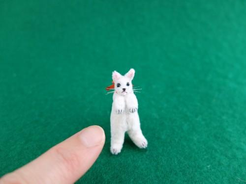 白猫ミニチュア 赤いブーツ3