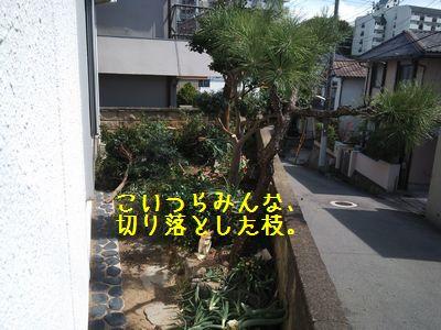 DSC_0325AAA.jpg