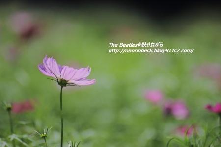 IMG6D_2015_09_11_9999_54.jpg