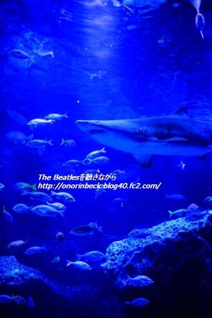 IMG6D_2015_09_12_9999_107.jpg