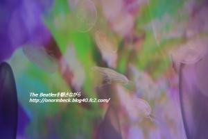 IMG6D_2015_09_12_9999_138.jpg