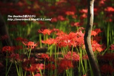 IMG6D_2015_09_19_9999_15.jpg