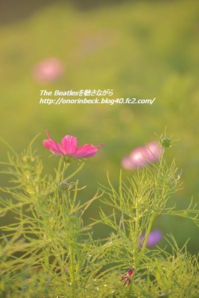 IMG6D_2015_09_20_9999_251.jpg