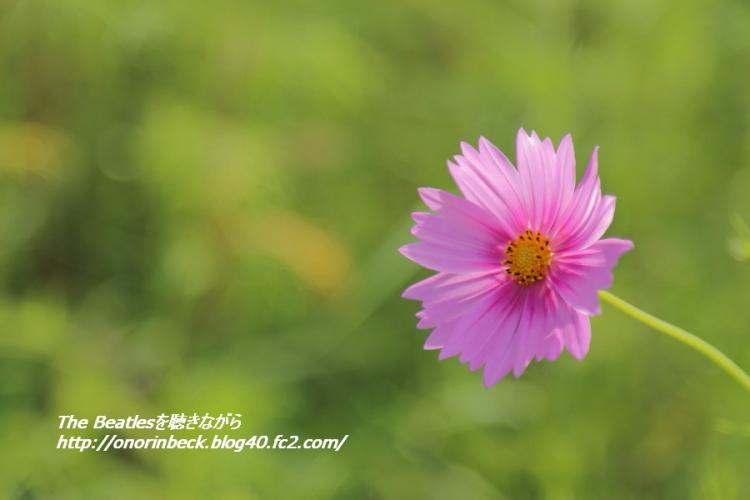 IMG6D_2015_09_22_9999_54.jpg