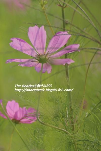 IMG6D_2015_09_23_9999_41.jpg