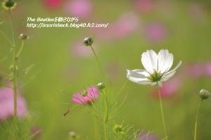 IMG6D_2015_09_23_9999_63.jpg