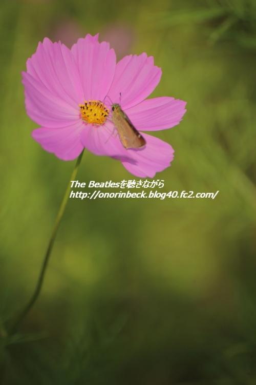 IMG6D_2015_09_23_9999_74.jpg