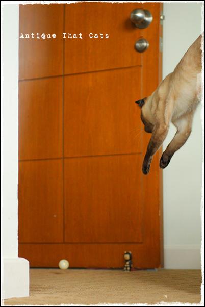おもちゃ ジャンプ シャム猫 タイ 原種 Siamese cat Thailand แมว ไทย วิเชียรมาศ アンティークタイキャット