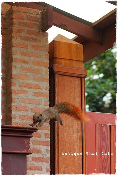 パタヤ Pattaya พัทยา リゾート resort รีสอร์ท リス Squirrel กระรอก