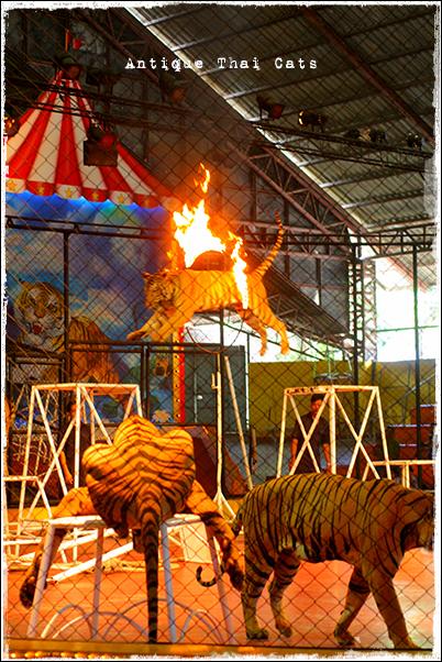 リゾート resort รีสอร์ท シラチャタイガーズー Sriracha tiger zoo สวนเสือศรีราชา