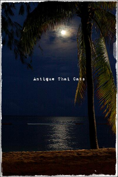 パタヤ Pattaya พัทยา リゾート resort รีสอร์ท 月 moon เดือน 砂浜 beach หาดทราย 海 sea ทะเล