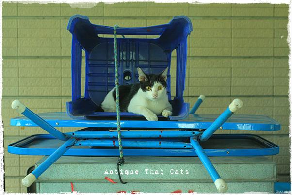 屋台 野良猫 Stray cats แมวจรจัด ヲソト猫 タイ Thai ไทย ルンピニ公園 Lumpini park สวนลุมพินี