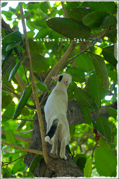 木登り 野良猫 Stray cats แมวจรจัด ヲソト猫 タイ Thai ไทย ルンピニ公園 Lumpini park สวนลุมพินี