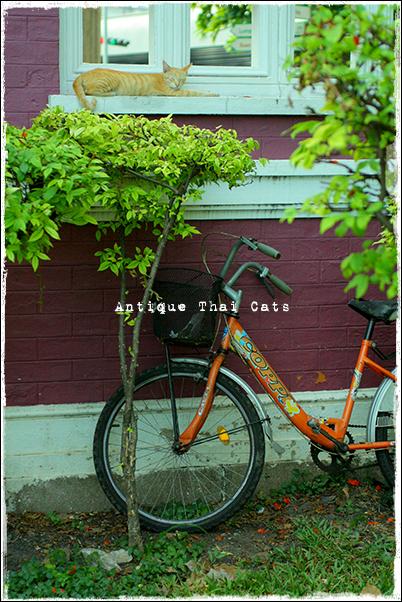もんぴ猫 野良猫 Stray cats แมวจรจัด ヲソト猫 タイ Thai ไทย ルンピニ公園 Lumpini park สวนลุมพินี
