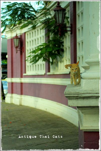 もんぴの家 野良猫 Stray cats แมวจรจัด ヲソト猫 タイ Thai ไทย ルンピニ公園 Lumpini park สวนลุมพินี