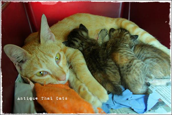そして母になる野良猫 Stray cats แมวจรจัด ヲソト猫 タイ Thai ไทย ルンピニ公園 Lumpini park สวนลุมพินี