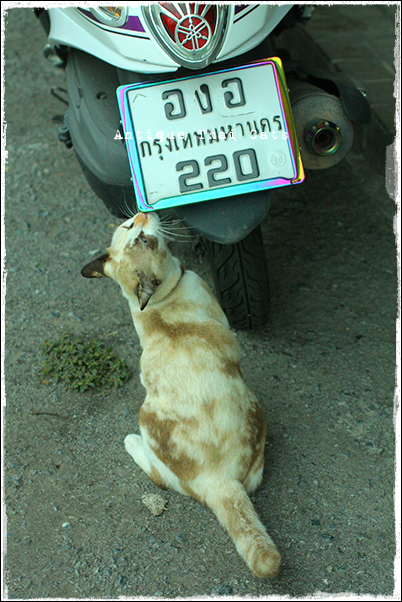 スクーター 野良猫 Stray cats แมวจรจัด ヲソト猫 タイ Thai ไทย ルンピニ公園 Lumpini park สวนลุมพินี