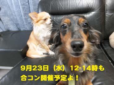 DSCF3311_201509180210101c9.jpg