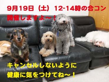 DSCF3313_201509180210106a3.jpg