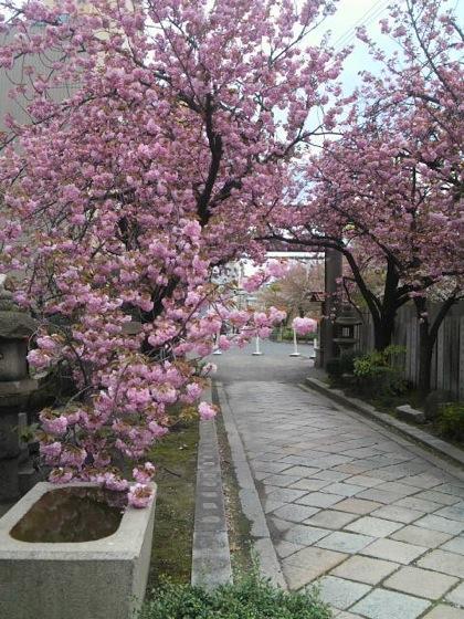 sakuranomiyajinjaDCIM1173.jpg