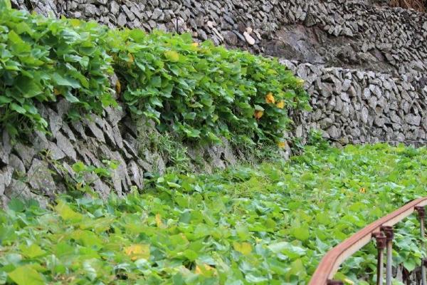 Yusumizugaura_004_org.jpg
