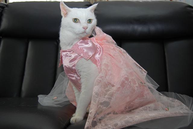 アタシは 猫界のトップもでるばい!