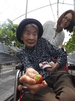 みよちゃん苺