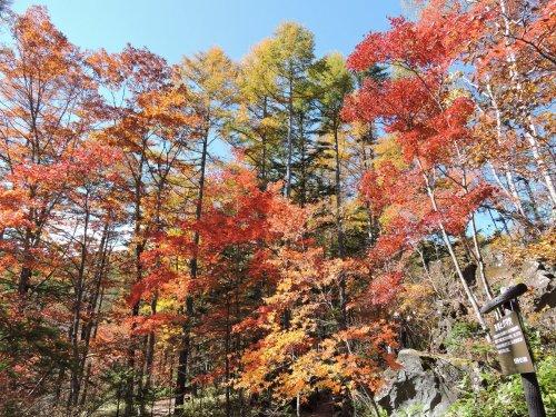 2015-07八千穂高原自然園