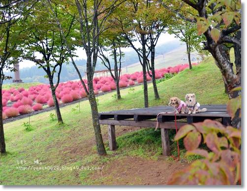 DSC_4414_2015102305294360a.jpg
