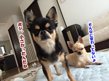 juneIMG_7505.jpg