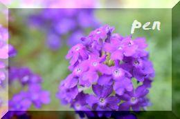 紫タピアン