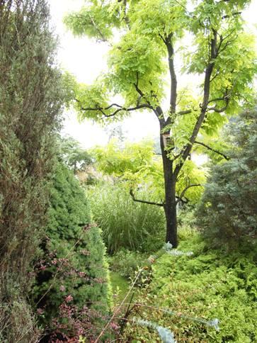 my-garden 053