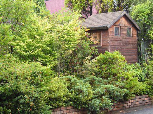 my-garden 015