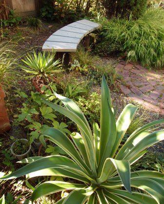 my-garden 095