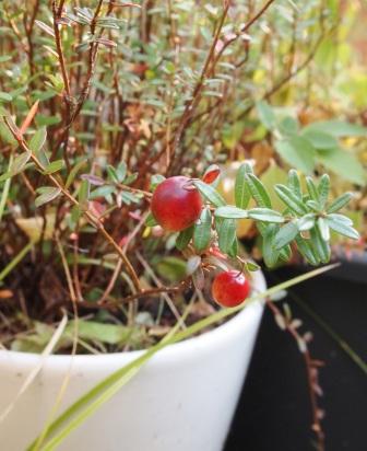 my-garden 022 (3)