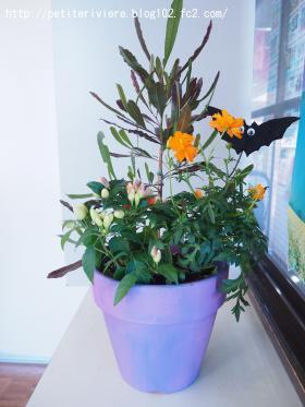 ハロウィンの寄せ植え