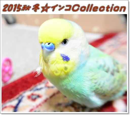 秋冬のファッション 2015秋冬インコCollection
