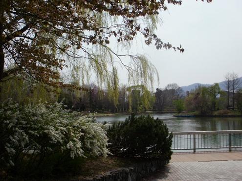 2015-04-23 春の中島公園