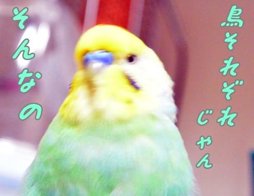 鳥、それぞれだよね1