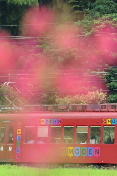 2015/8/22 和歌山電鐵貴志川線 大池遊園~西山口