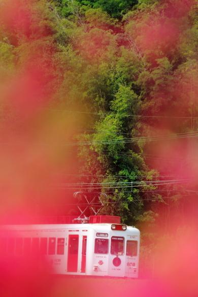 2015/8/29 和歌山電鐵貴志川線 大池遊園~西山口