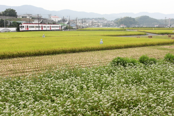 2008年10月 和歌山電鐵貴志川線 大池遊園~西山口