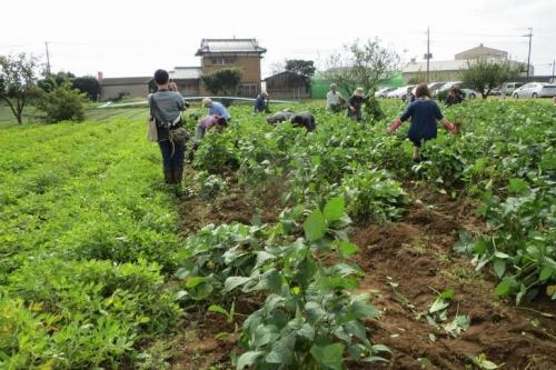 sh.収穫祭 20151018 004-1