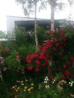 ファームヤード~お庭