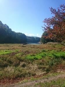 みどり湖風景1