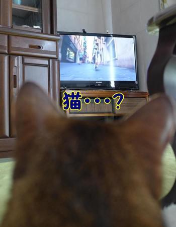 テレビ好き?
