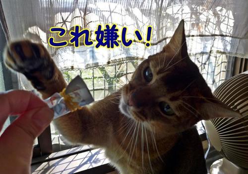 kirai_201510181615120b5.jpg