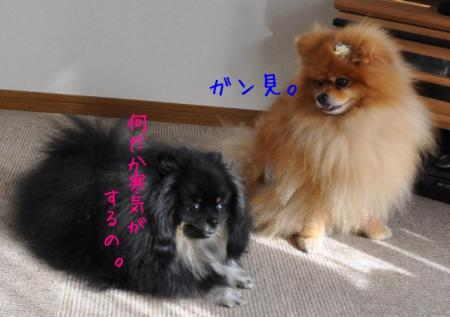 DSC_4925_convert_20150826212257.jpg