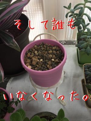 IMG_2701_convert_20150826212653.jpg