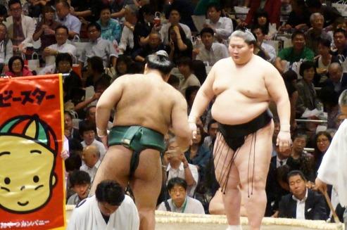 sumo12